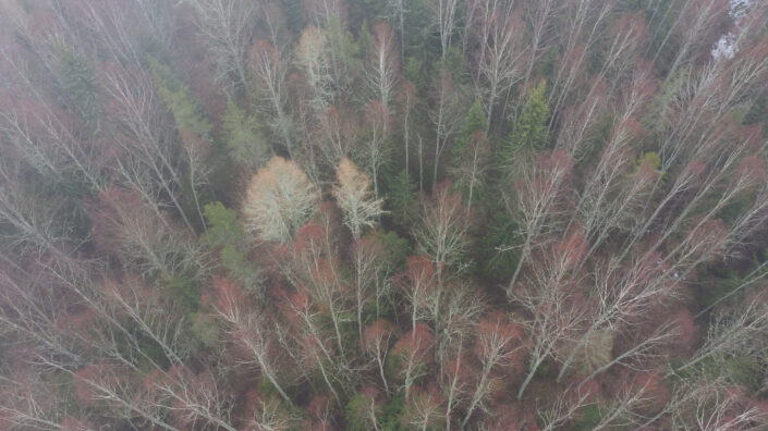 Mets kevadine mets forest Estonia