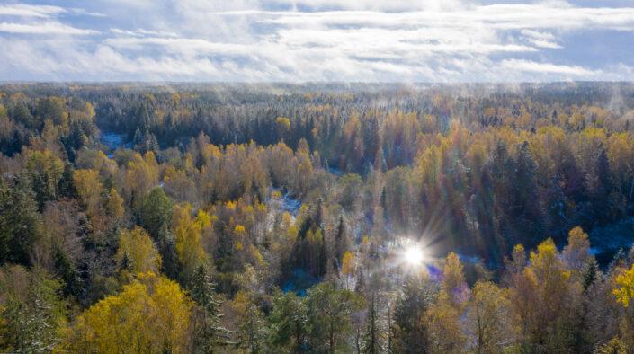 Drone photography river forest snow and mist Droonifoto jõgi mets udu ja lumi